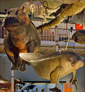 animali-del-museo-scozzese