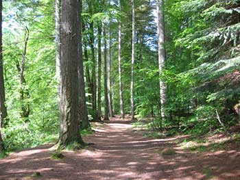 Alberi nella Foresta dell'Hermitage