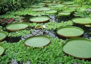 Giardino Botanico di Edimburgo